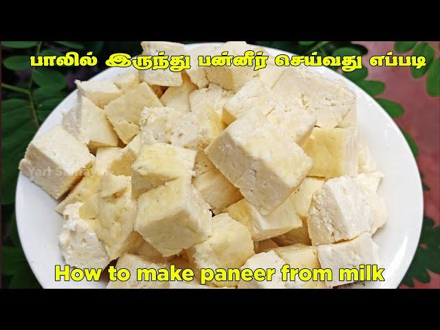 இலகுவாகன முறையில் உங்கள் வீட்டிலேயே பன்னீர் தயாரிப்பது எப்படி?  | How to make paneer from milk