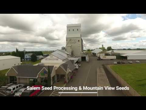 An Overview of Mountain View Seeds