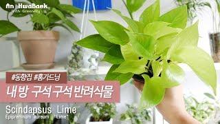 |#방구석가드닝| 동향 집에서 키우는 식물들_(실내공기…
