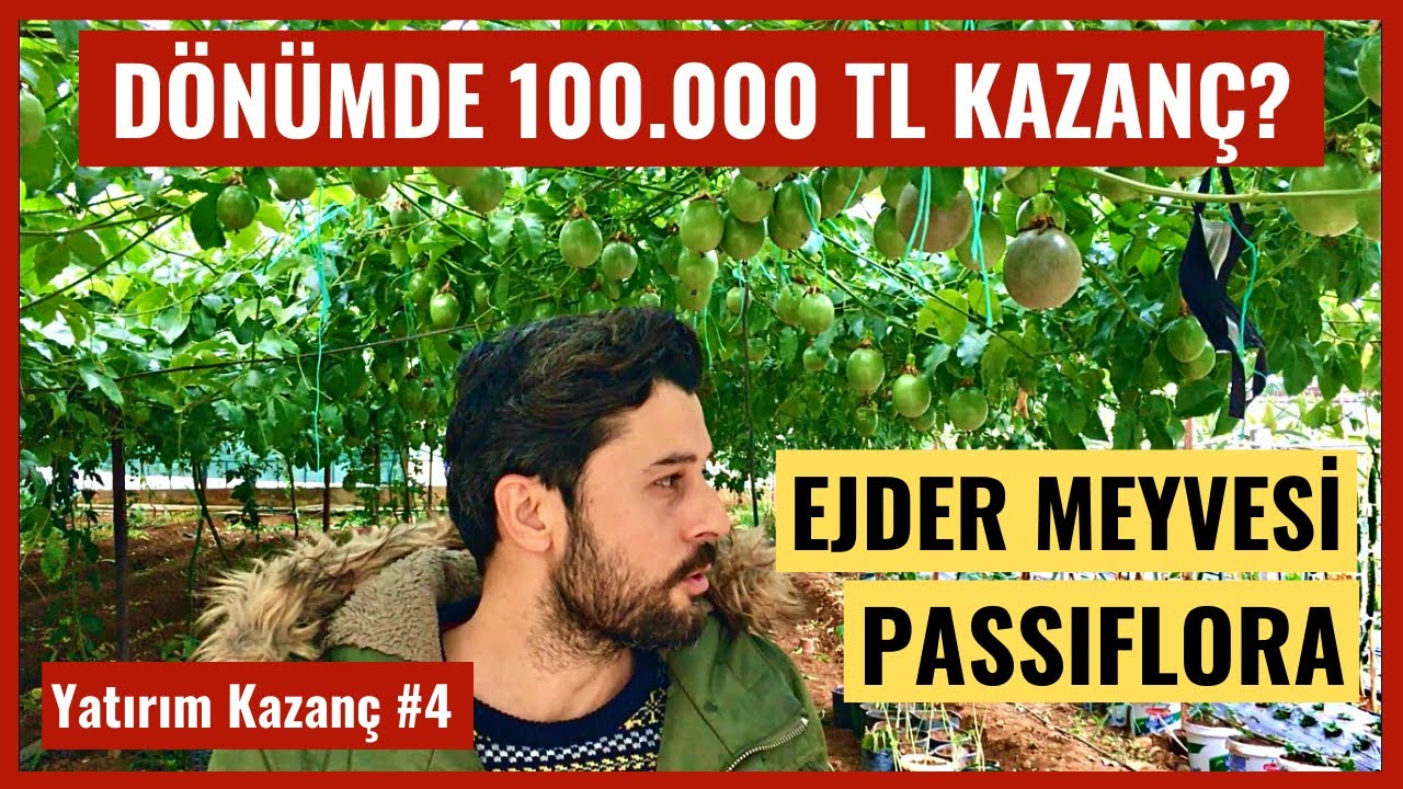 Yatırım & Kazanç Bölüm #4 - Türkiye'de Passiflora ve Ejder Meyvesi Üretimi Para Kazandırır Mı?