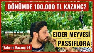 Yatırım  Kazanç Bölüm 4 - Türkiyede Passiflora ve Ejder Meyvesi Üretimi Para Kazandırır Mı?