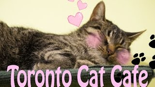 Toronto's 1st Cat Cafe! TOT The Cat Cafe