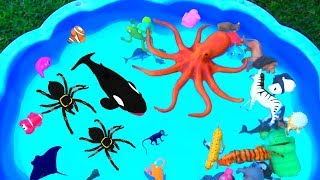 Learn Colors With Wild Animals and Sharks in Blue Water Tub Toys For Kids Child
