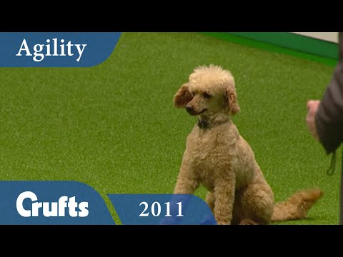 Agility 2011 - Crufts Singles Final: Small, Medium & Large   Crufts Dog Show