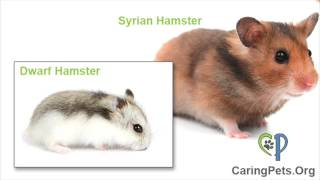 Small Pet Identification Guide