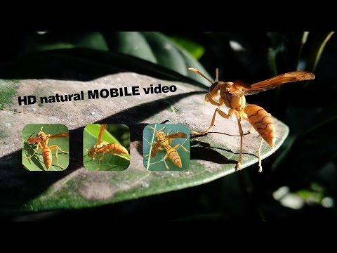 HONEY BEE hd nature videos 1080p Blue Ray