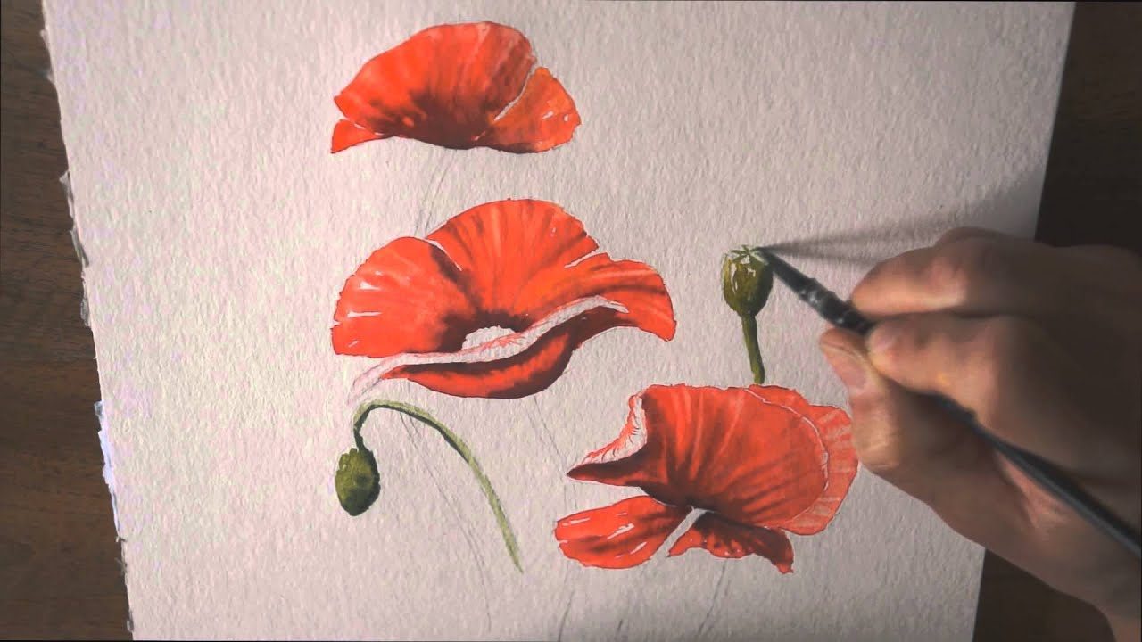 d mo aquarelle les coquelicots watercolor tutorial