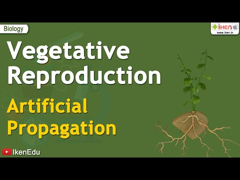 Vegetative reproduction is also a type of asexual reproduction
