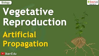 Vegetative Reproduction - Artificial Propagation