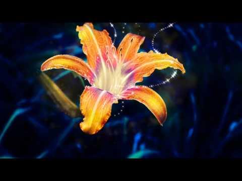 Healing Song - Tangled