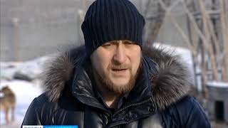 В Красноярске продолжают искать подрядчиков для отлова бездомных собак