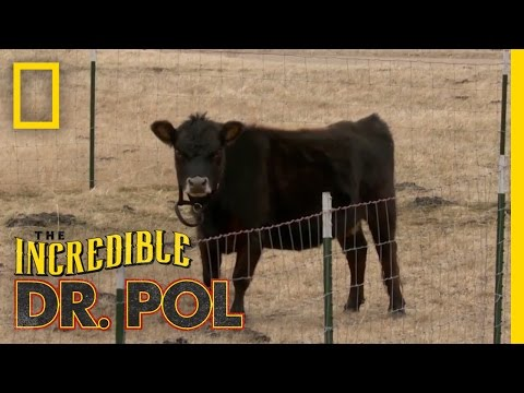 One Mini Mama | The Incredible Dr. Pol