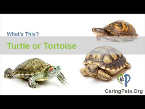 Types of Turtles and Tortoises