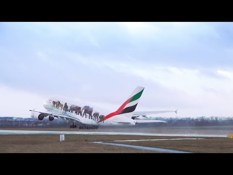 Emirates is United for Wildlife | World Wildlife Day
