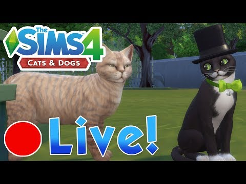 Sims 4: Cats & Dogs • The Secret Kitten Hideaway & Pigeon Paradise • Finished Livestream