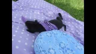 Pet And Dog Adoption Services In Virginia, Alexandria, Richmond