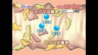ミオナTV通販公式サイト (http://www.307.jp/)の「ニューシースルーラ...