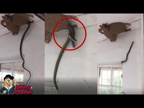 Pemilik Rumah Ini Kaget Melihat Sesuatu Aneh di Dinding Rumahnya