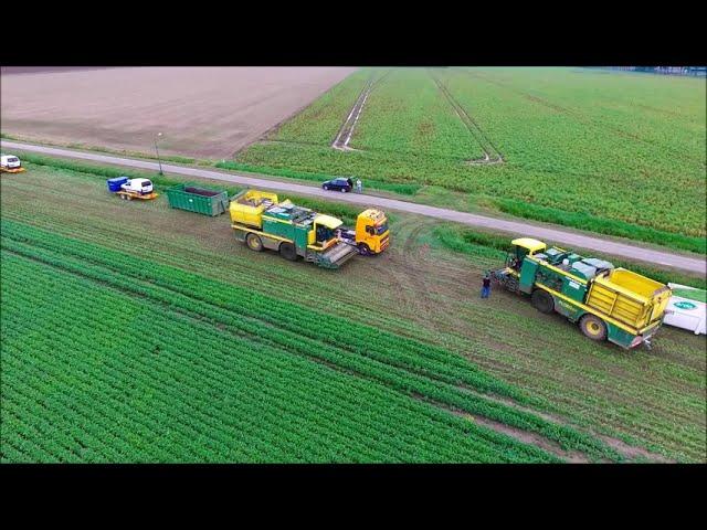 Harvesting beans / Ernte von Bohnen / Sperziebonen oogsten / Drone Landbouw / Agriculture