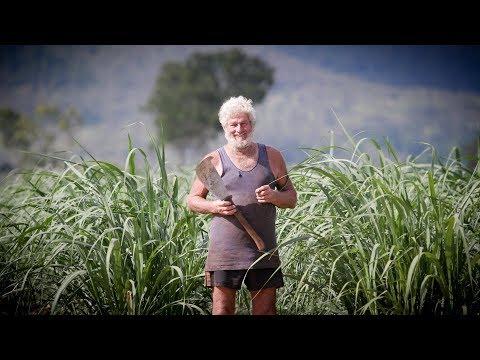 Do Australians Need a Sugar Intervention?   Times Documentary