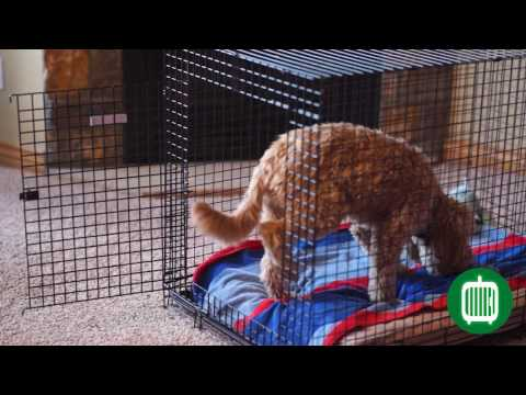 KONG Solutions German Crate Training