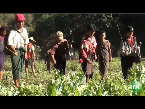 Myanmar Citizens Take Drug War Into Own Hands