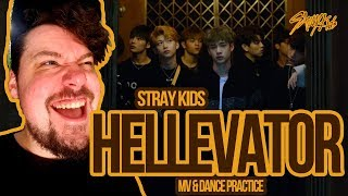 Video Mikey Reacts to Stray Kids 'Hellevator' MV & Dance Practice download MP3, 3GP, MP4, WEBM, AVI, FLV September 2018