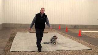 Psammy (fox Hound) Boot Camp Dog Training