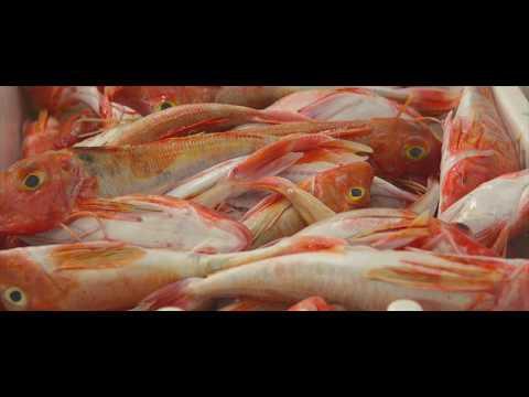 Brixham Fish Market Tour