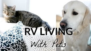 RV Living with Pets | Where to put a Cat Litter Box?