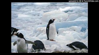 ペンギンだって空を飛びたい ↓こちらから無料でダウンロードできます。 ...