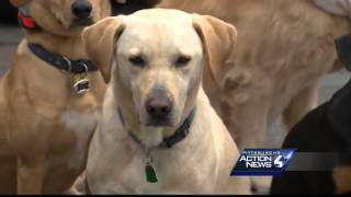 Dogs Rescued, Trained To Be Service Dogs For Veterans