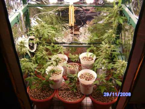 Cultivo interior marihuana bajo consumo microesquejes  YouTube