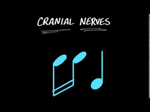 MY CRANIAL NERVE SONG