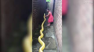 Footage shows young girl petting python on Facebook   Daily Mail