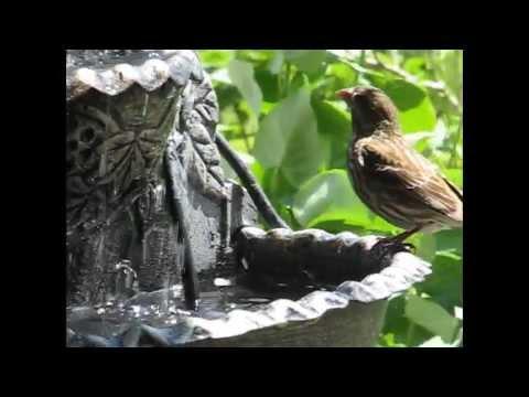 Fontaine murale pour les oiseaux youtube for Decoration murale pour exterieur