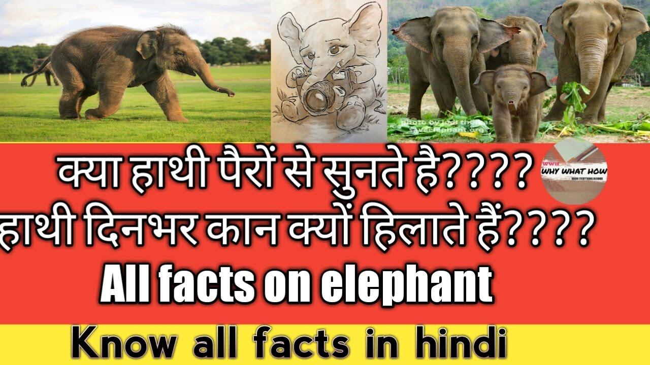 Uncategorized Elephant Information facts on elephants true amazing about elephant information in hindi