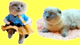 ПОТЕРЯЛИ КОШКУ! Куда ПРОПАЛА кошка ОРЛАН? Кошечка примеряет платье! Первая Котосессия кошки ОРЛАН😻