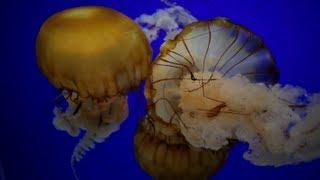 Next Stop: Newport - Oregon Coast Aquarium