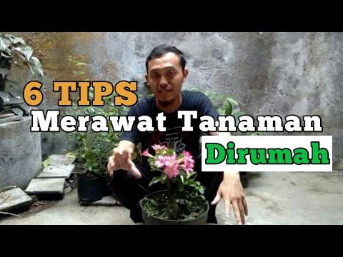 Tips Merawat Tanaman Di Rumah L Agar Tanaman Tumbuh Subur L Merawat Tanaman #yuktani #tips