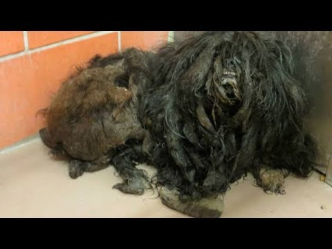 Under the Mound of Fur – An Incredible Shelter Dog Transformation