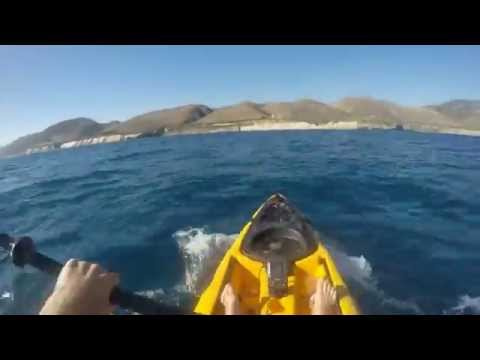 Акула молот нападает на человека  Hammer Shark attacks human