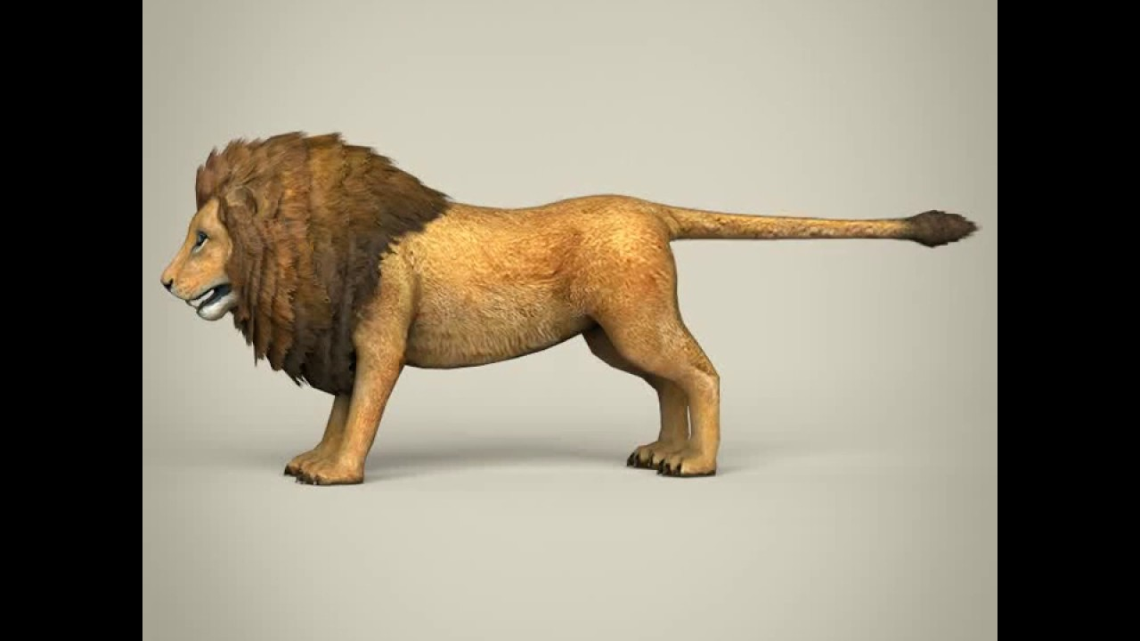 3D Model of Low Poly Realistic Lion Review