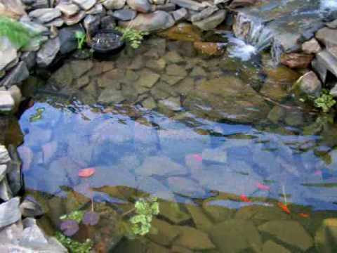 Diy 2000 liter 520gal goldfish pond 2 weeks old youtube How to build a goldfish pond