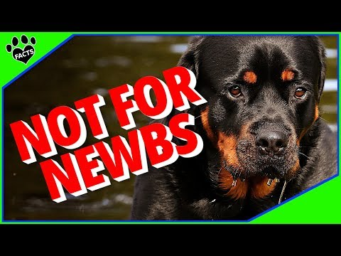Difficult Dog Breeds - Not for Newbies