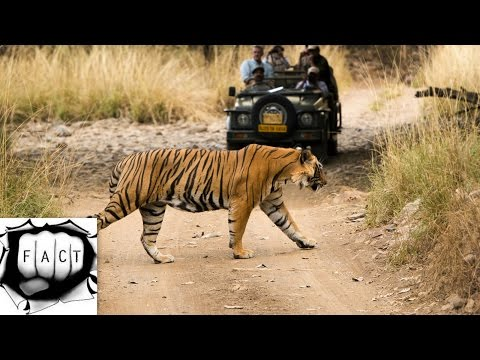 Top 10 Wildlife Sanctuaries In India
