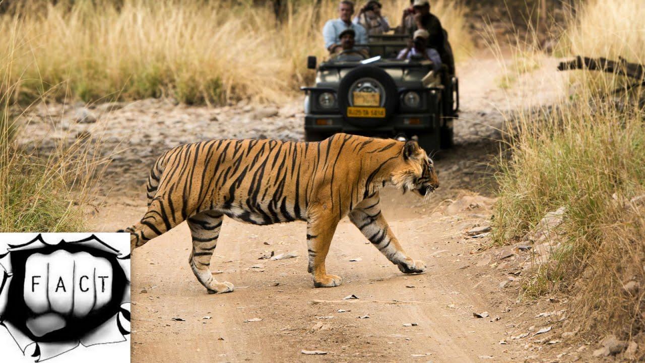 Top 10 India's Best Wildlife Sanctuaries