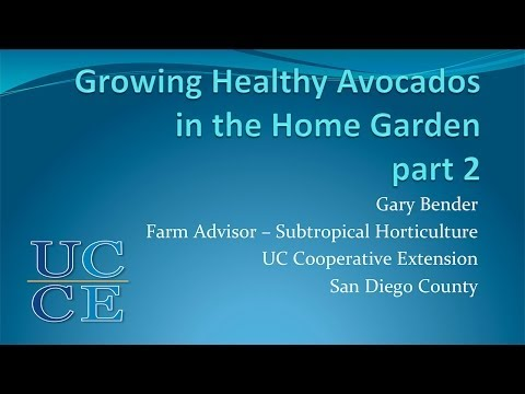 Session 8  Avocados with Gary Bender Part 2