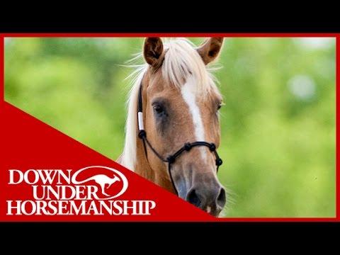 Clinton Anderson: Training a Rescue Horse, Part 2 - Downunder Horsemanship