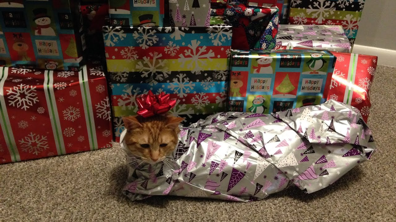 how to wrap your cat for christmas - How To Wrap A Cat For Christmas